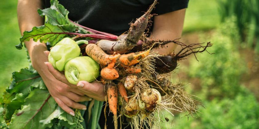 South Florida's First Agrihood is Underway
