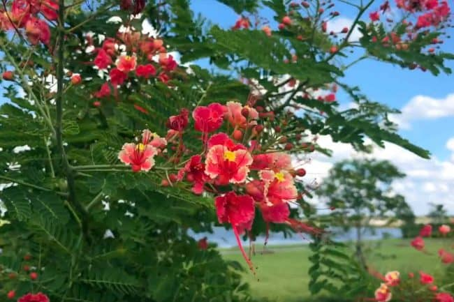 arden-butterfly-garden-video